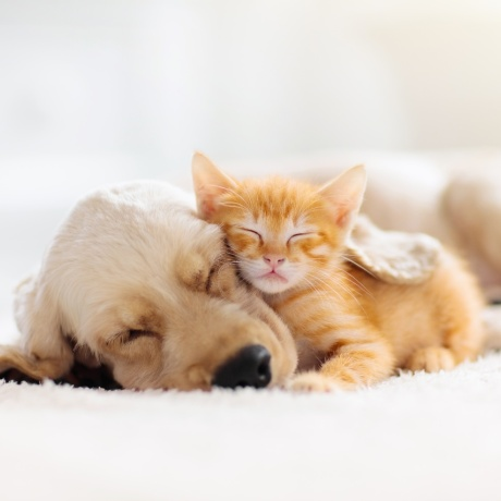 Simple tips to make your home pet-friendly