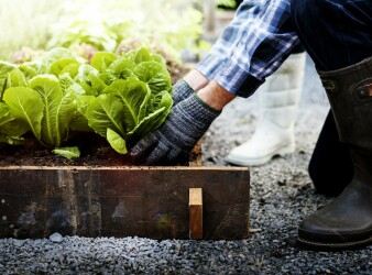 Generation Homes Plan What to consider when landscaping your new home