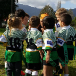 Reporoa Rugby