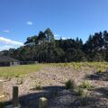 Generation Homes Auckland North House and Land Packages - Orewa- Flat site, bush, birds, trees and sun!