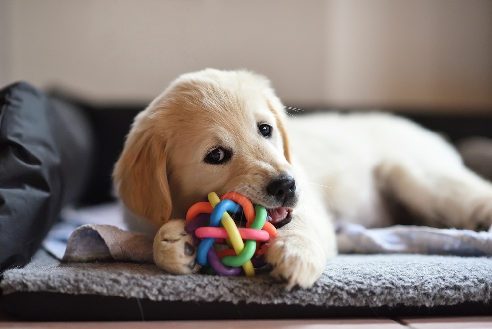 6 Best Pet Friendly House Design Tips Generation Homes