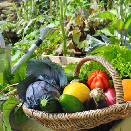 The A-Z of edible gardens